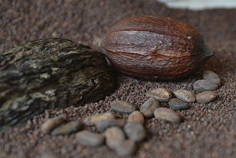 Fève Cacao Tristan chocolatier Suisse